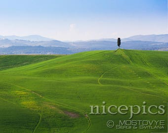 Alone tree on a tuscanian hills of grass downloadable digital art print