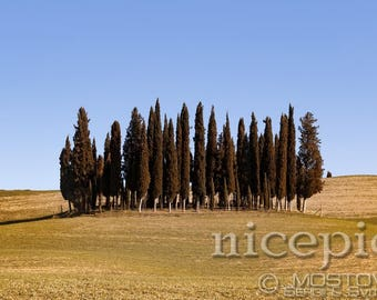 Famous cypress island at the tuscanian fields downloadable digital art print