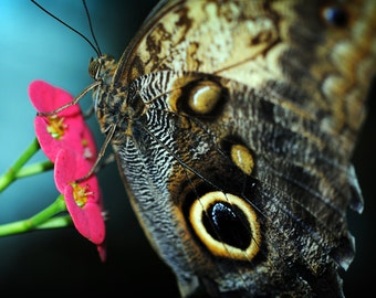 """Nature Photography - Macro Photograph - Butterfly Print - Pink - Spring Flower Wall Art - """"Caught in the Moment"""""""