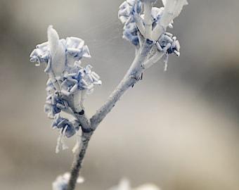 "Nature Photography - Fine Art Print - Wedding & Nursery Wall Decor - Seasons Collection - ""Winter"""