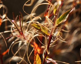 """Nature Photography - Fine Art Print - Fall Colors - Wall Decor - Seasons Collection - """"Autumn"""""""