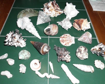 "26 Seashells Few Coral Pieces 1"" to 4"" Lovely Specimens Wide Variety All in Very Good Condition"