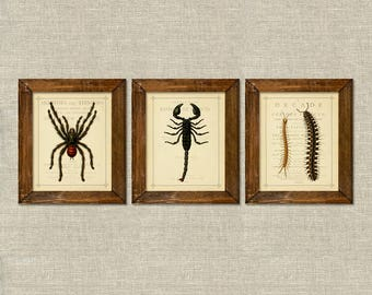 Halloween Insects Tarantula Spider Scorpion Centipede vintage printable wall art set of 3