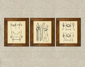 Equestrian horse tack bits bridles vintage printable wall art décor set of 3