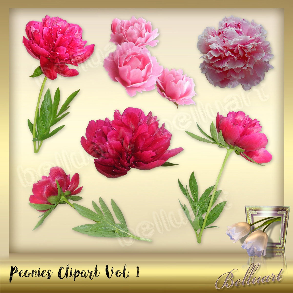 6 Peonies Clipart Vol. 1 Peony Clipart Real Style clip art | Etsy