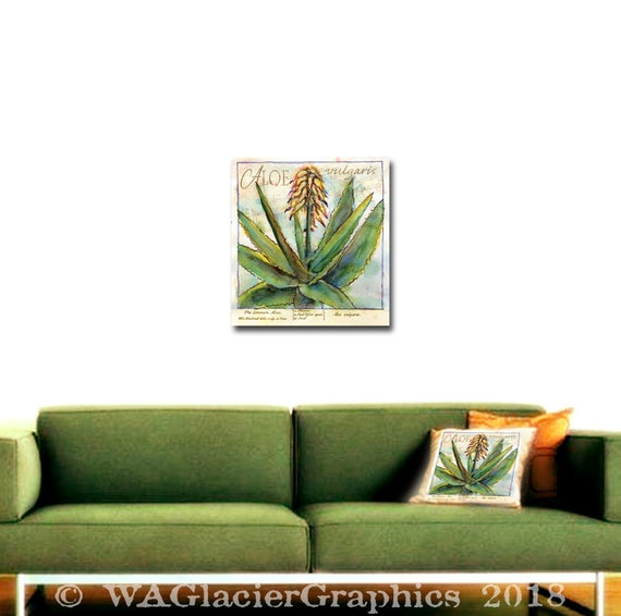 Original Watercolor Vintage Aloe Botanic Print Aloe Vulgaris Print Original  Botanic Print Aloe Transfer Collage Sheet Printable Digital