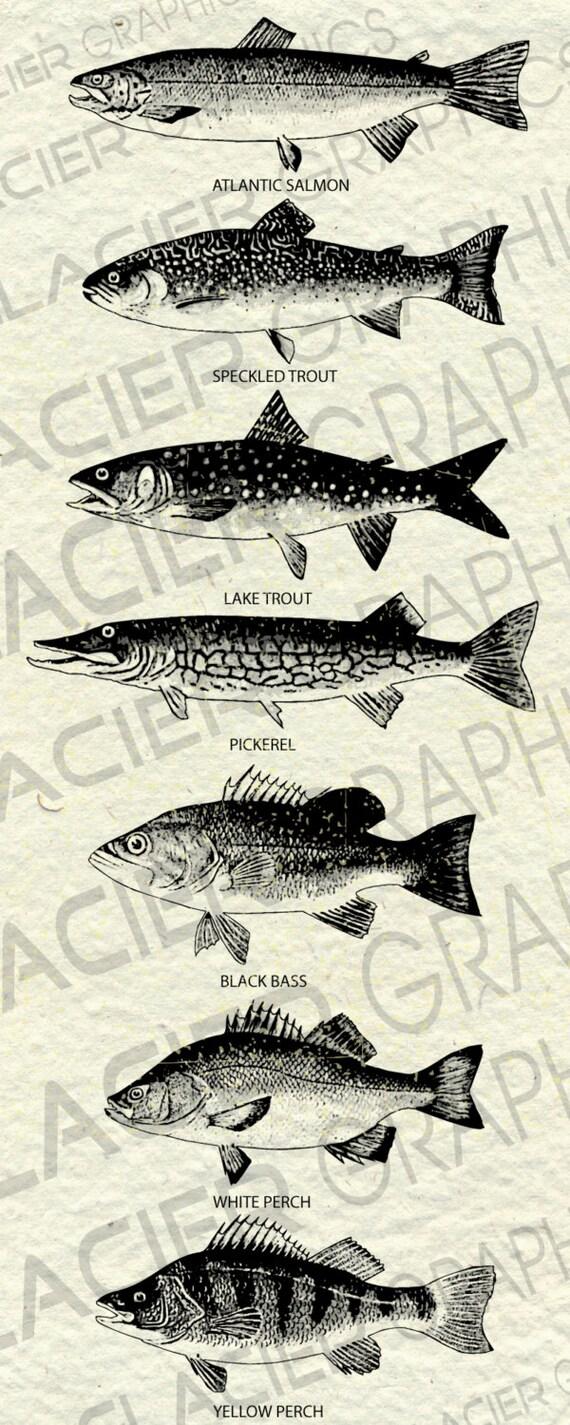 goby print Kurte Blochien underwater world fish decor vintage fish print Original antique fish print 1835 Fish engraving