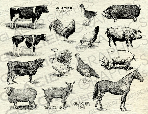 Vintage Farm Animal Illustrations Printable Farm Animals Clipart Farm  Animals Vector Country Farm Animals Clipart Copyright Free