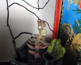 Plant composition in pot, plant composition pot, flower pot, flower pot