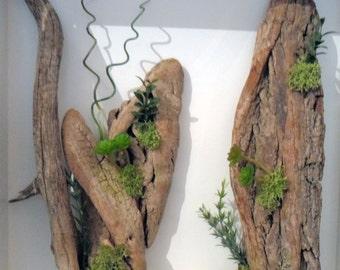 Mobile plant, mobile plant, mobile wood, mobile wood, vegetal design, green