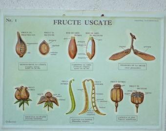 Vintage Seed Chart, Educational School Chart, Old Botanical Print, Wall Decoration, Wall Hanging, Vintage Illustration, Embossed Plastic
