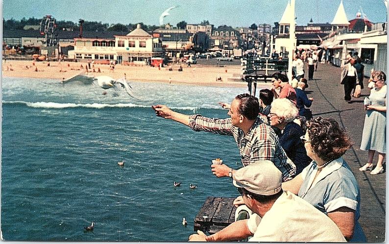 Vintage Unposted Postcard Man Feeding Seagulls Birds Old Orchard Beach Maine ME P28101 DS-798 Lou Thompson Plastichrome Colourpicture