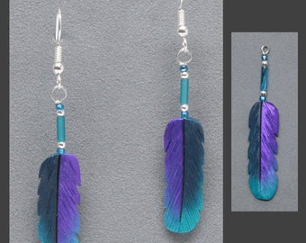 Silver Hawk Studio~The Original Bone Feather Jewelry! Earrings shown in Violet-tailed Sylph Hummingbird