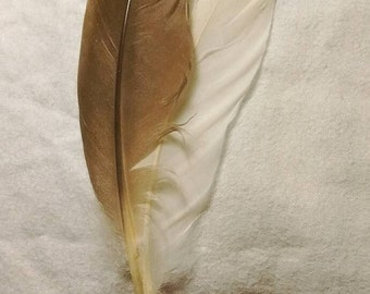 Native Style Hand Wrapped Smudge, Hair Tie, or Decorative  Feathers