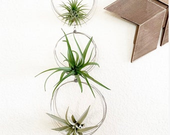 Whimsical Triple Tiered Air Plant Hanger