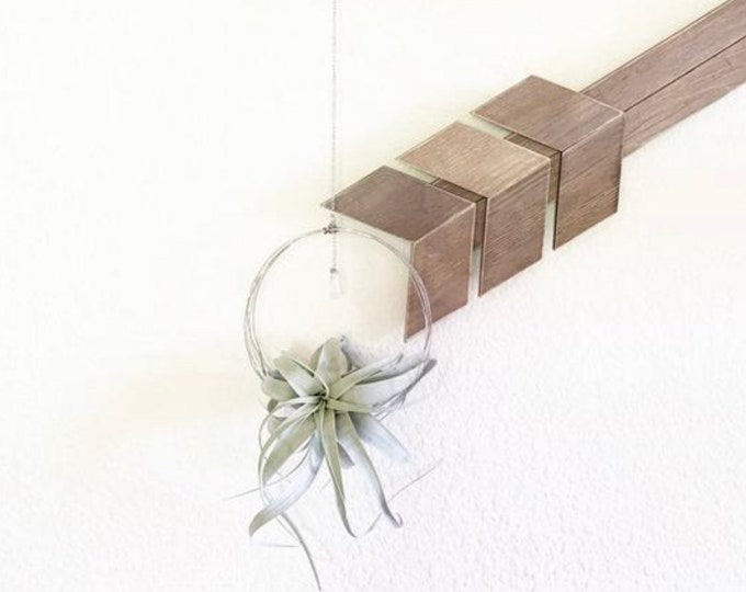 Xerographica Air Plant and Hanger