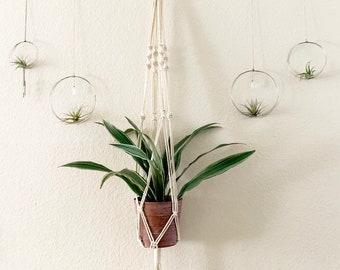 Long Spiral Macrame Plant Hanger