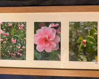 Camellia triptych photography in pack style frame. Pink flowers, buds and bush at Dunham Massey.
