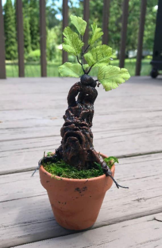 Mini Mandrake Harry Potter Plant Etsy