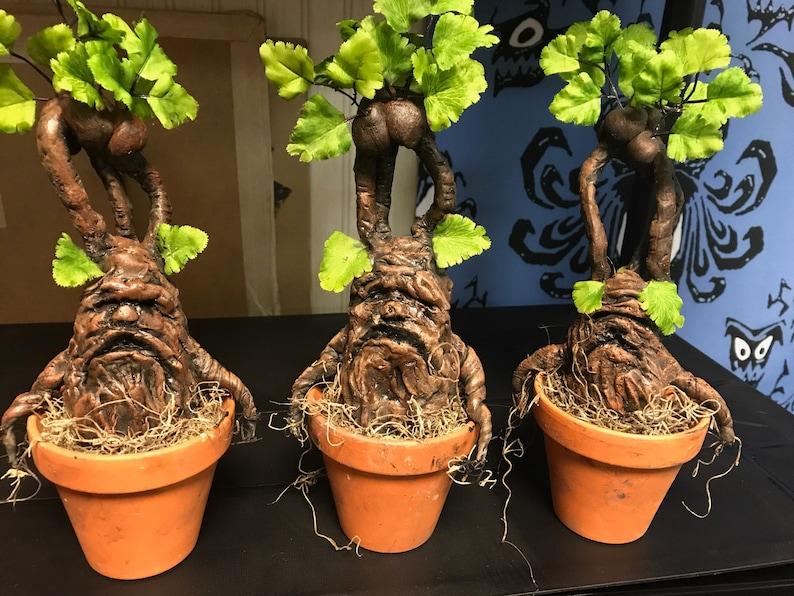 Medium Mandrake image 0