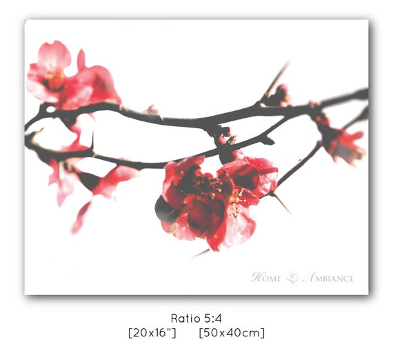 Quince Flower Branch With Thorns Red Blossom Minimalist Fine Etsy
