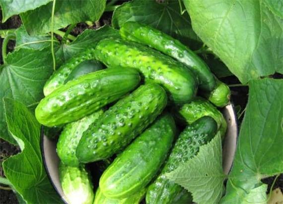 Gemüse Mark F1 Bush Baby 10 Samen