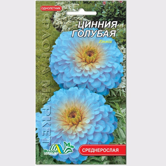 Zinnia haageana Blue Flower Seeds from Ukraine #764