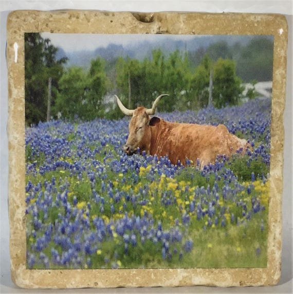 Texas Widflower Coasters