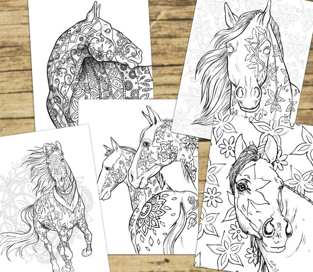 Adult Coloring Book Pages Horses Equine Art