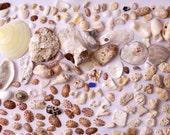 Ahnliche Artikel Wie Sammlung Von Muscheln Steinen Glaser Mutter