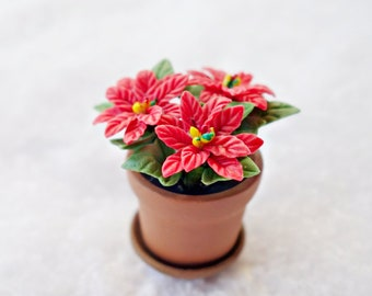 Miniature poinsettia, red
