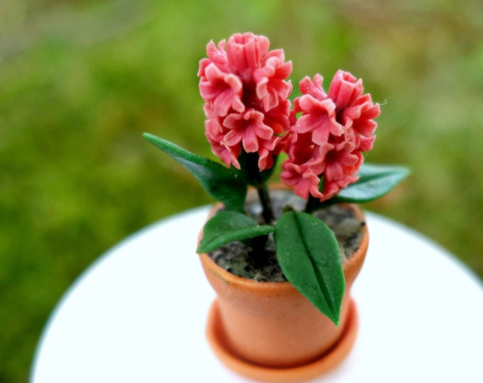 Hyacinth in pot - Pink