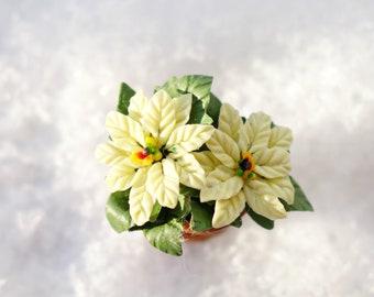 Miniature poinsettia, white