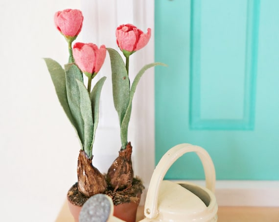 Dollhouse tulips coral