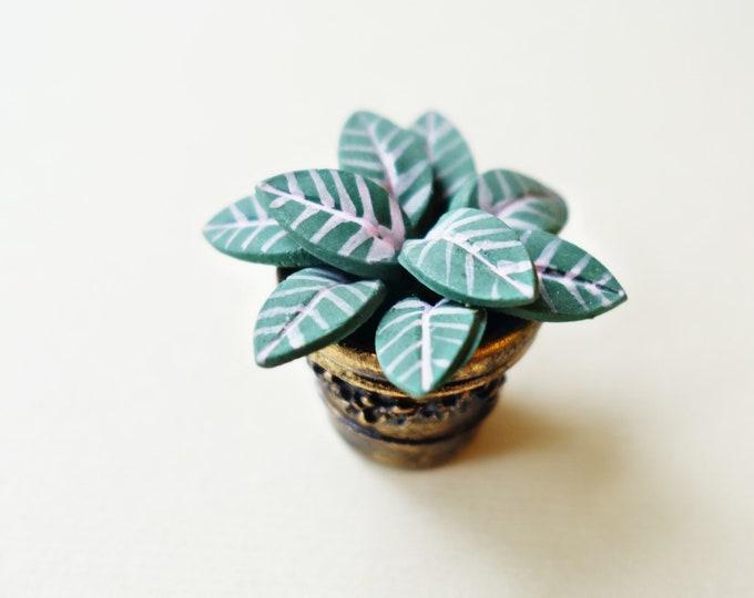 Tropical plant B