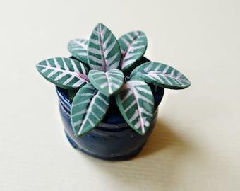 Tropical plant A