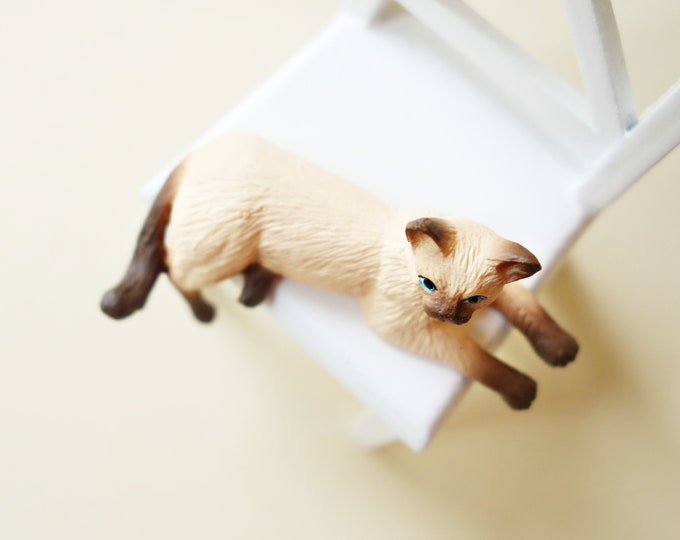 Siamese cat with hanging paw