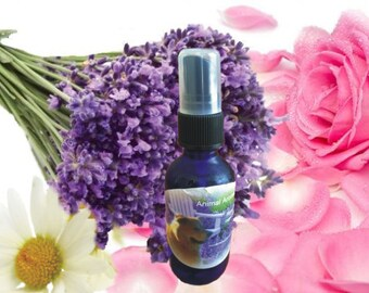 Organic Lavender/Rose/ Chamomile Co-Distillation