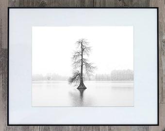 Fine Art Photograph - Alone in the Fog - Louisiana