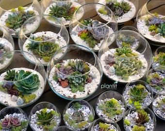 Succulent Wedding Centre Piece