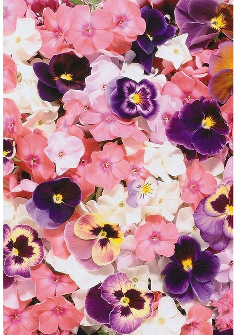 1 X A4 Flor Pensamiento Rosa Impresa Fondos Florales Etsy