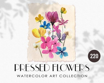 Nature wedding clipart Real flowers clipart Blue dried flowers PNG clipart 34 PNG Pressed  flowers Digital herbarium Forget Me Not flowers