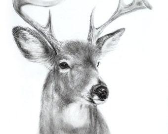 Stag Deer Drawing Charcoal Art Print Wildlife