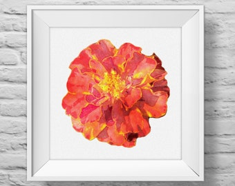 MARIGOLD IN ORANGE - unframed square art print, inspirational, nature, floral, watercolor, photography, wall decor. (R&R0100)