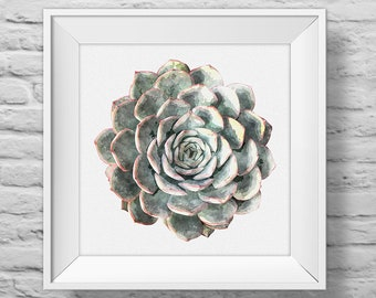 SUCCULENT - unframed square art print, inspirational, nature, floral, botanical, watercolor, photography, wall decor. (R&R0184)