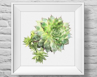 HENS + CHICKS - unframed square inspirational art print, nature, floral, botanical, succulent, watercolor, photography, wall decor (R&R0185)
