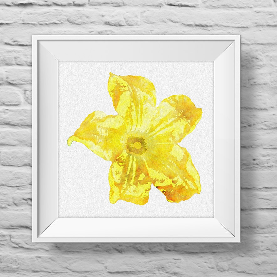 ZUCCHINI FLOWER in YELLOW - unframed square art print, inspirational ...