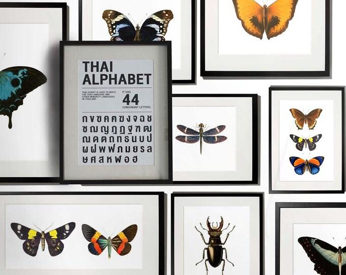 Butterflies Wallpaper, butterfly wallpaper, Watercolor, Butterfly frames, Wallpaper, vintage wallpaper, frames, framed wallpaper, wall art
