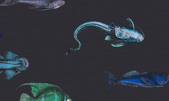 Fish Wallpaper Acquario Wallpaper Cole Son Fishes Tropical Wallpaper Fornasetti Wallpaper Fish Fornasetti Removable Wallpaper