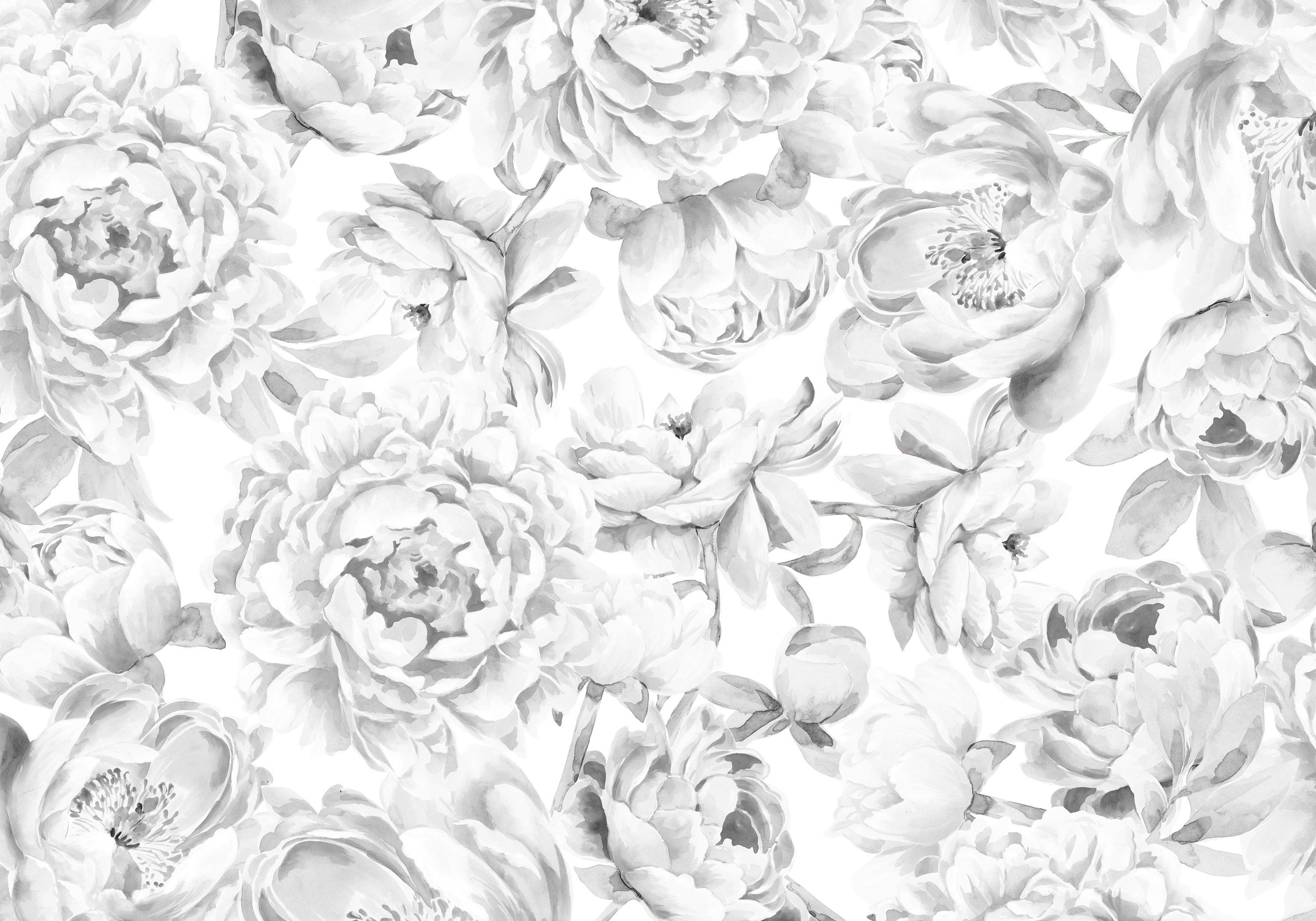Black White Peony Flower Wallpaper Peonies Wallpaper Floral